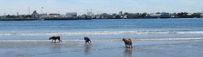 My Favorite Dog Friendly Places in New Jersey